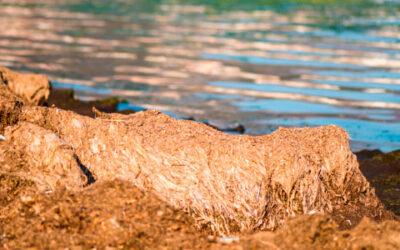 ¿Cómo se gestionan los restos de Posidonia en las playas de Sant Josep de la Talaia?