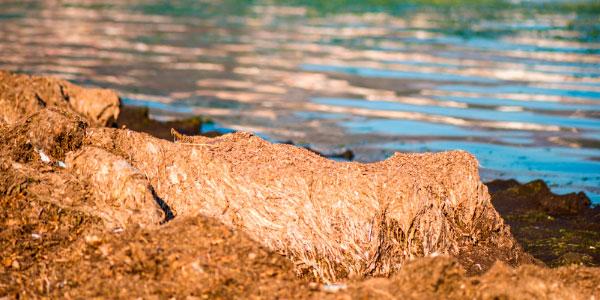 Com es gestionen les restes de Posidònia a les platges de Sant Josep de sa Talaia?